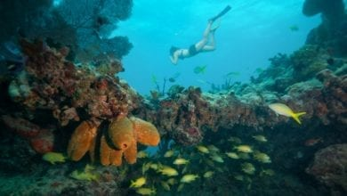 Best Snorkeling in the Florida Keys - Image 2.0