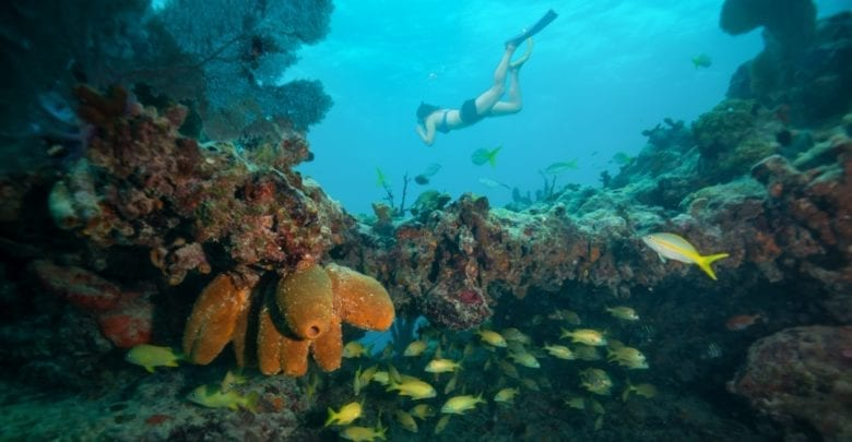 The 7 Best Snorkeling Tours In Key West 2019 Reviews