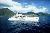 Oahu Catamaran Cruise Wildlife, Snorkeling Tour and Hawaiian Buffet small