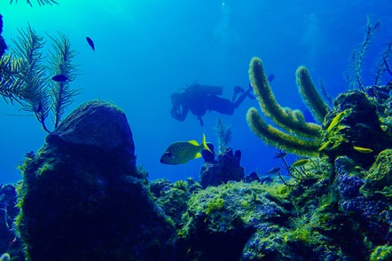 SCUBA Diving and Snorkeling Tour at Roatans North Shore