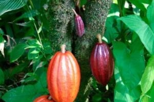 chocolate-tour-and-cahuita-national-park-from-limon-in-limon-330642