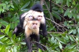 palo-verde-national-park-riverboat-cruise-from-tamarindo-in-tamarindo-205970