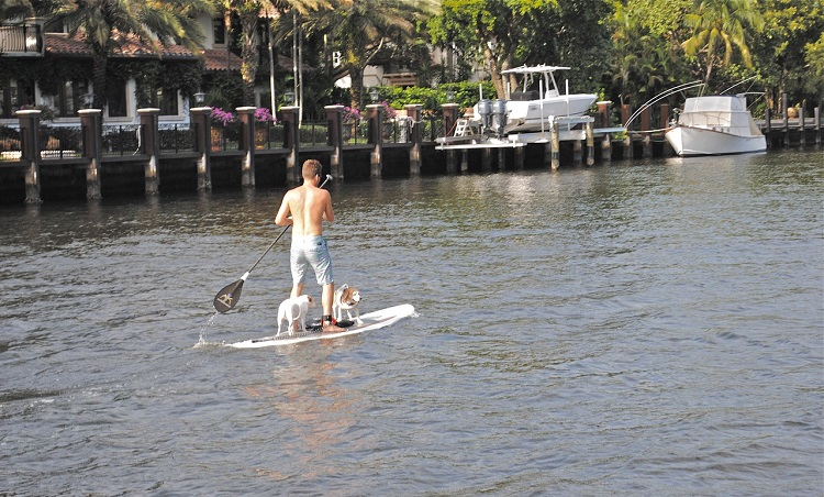 Paddleboarding With Your Dog