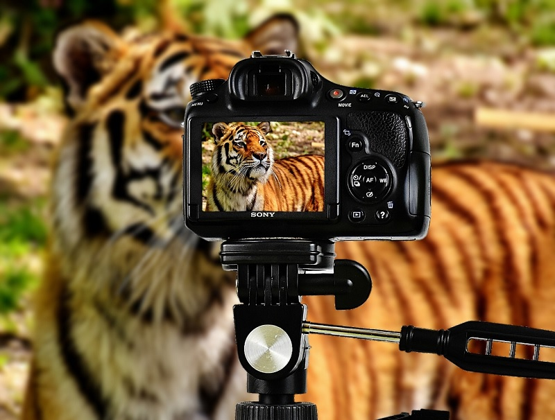 best wildlife photography cameras