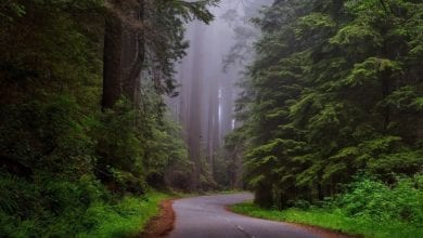 best muir woods tours