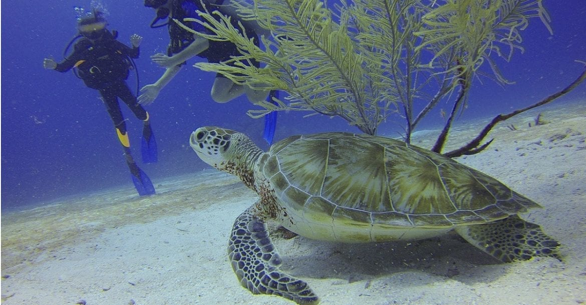 6 Most Commonly Made Scuba Diving Mistakes