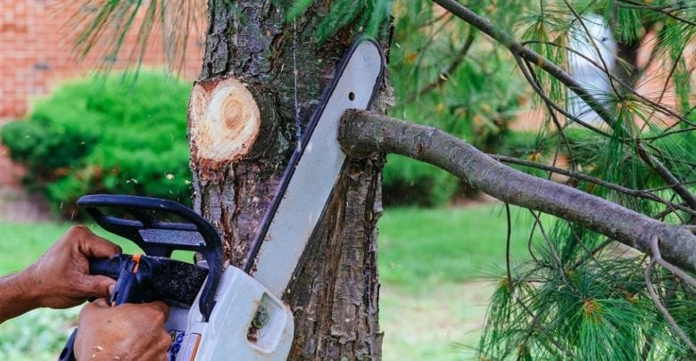 Best Electric & Cordless Battery Chainsaw