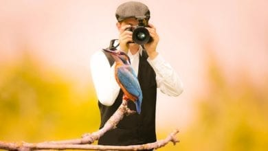 7 tips for starting bird watching