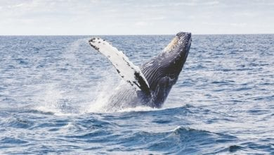 best whale watching tours from vancouver