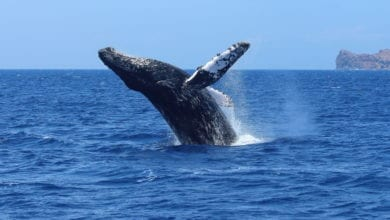 cabo best whale watching tours