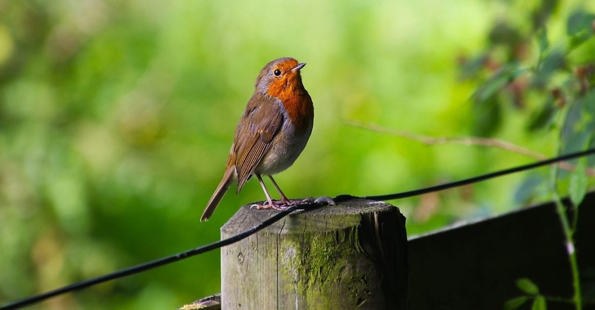 How To Get Started With Wildlife Photography