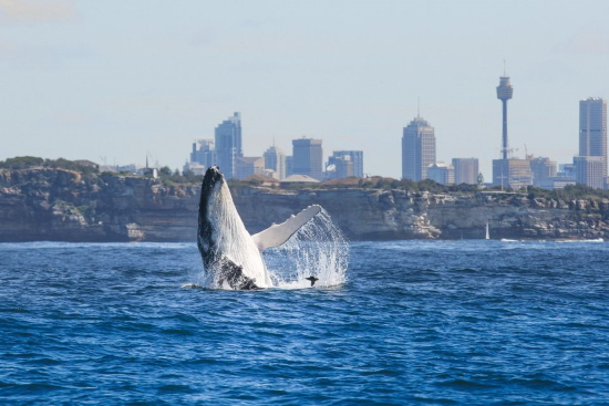 best sydney whale watching tours guide