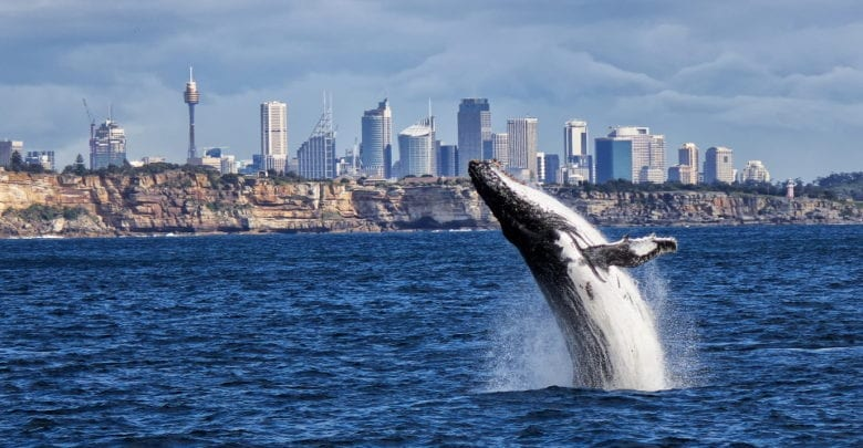 best sydney whale watching tours reviews