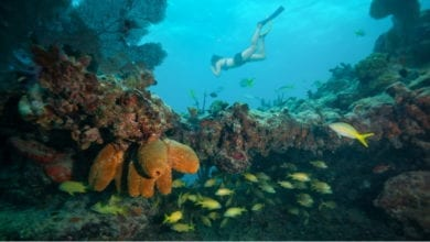 Best Snorkeling Tours in Key West