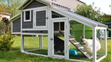 best chicken coops