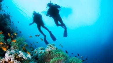 Tips for First Time Scuba Divers