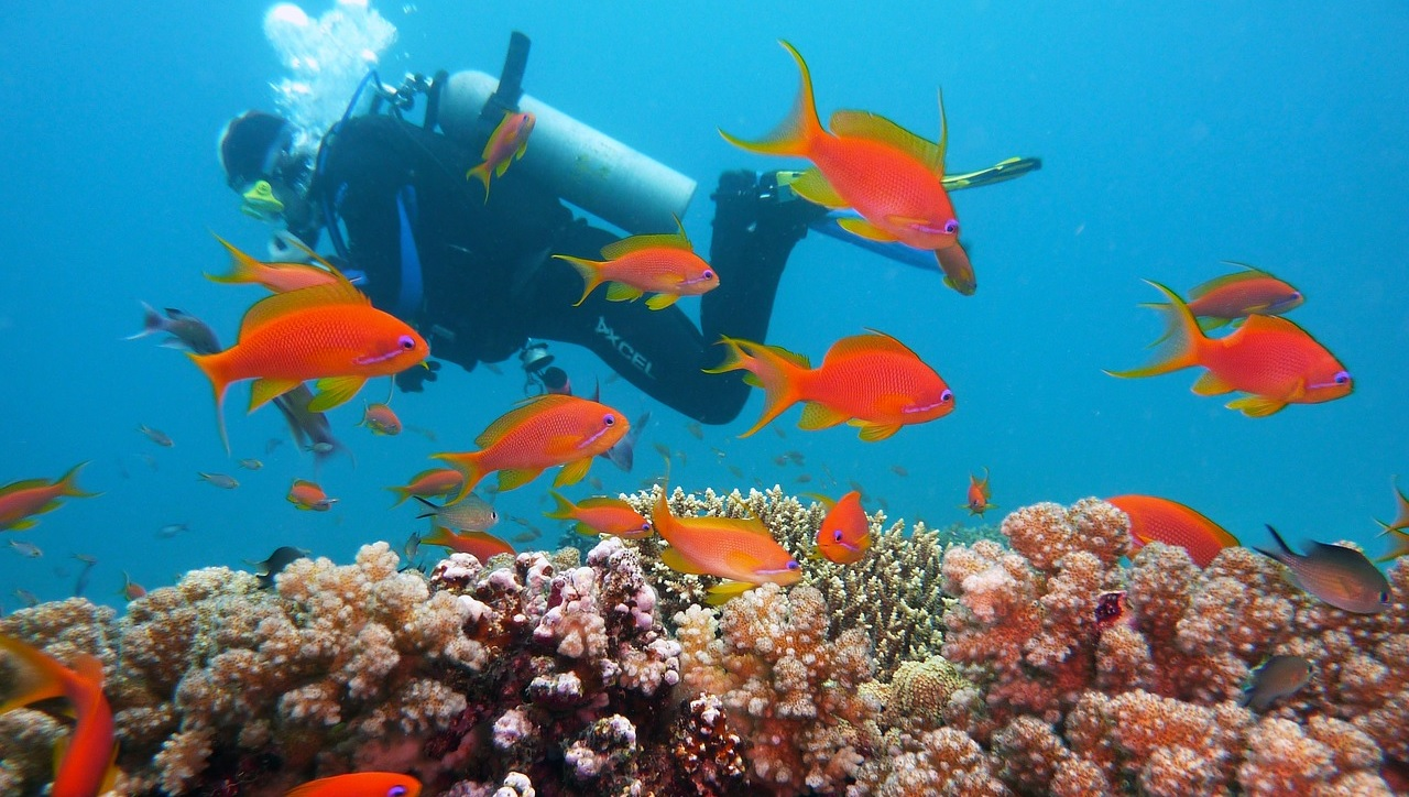 What Scuba Gear Should You Buy First